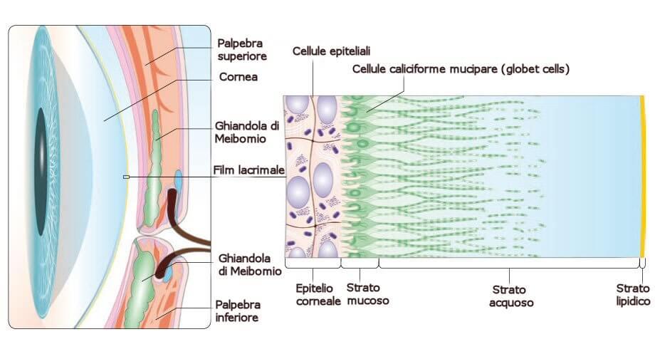 Disturbi della lacrimazione: l'occhio secco